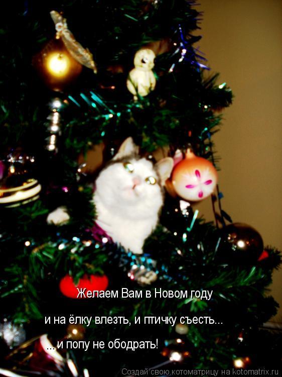 Котоматрица: Желаем Вам в Новом году  и на ёлку влезть, и птичку съесть... ... и попу не ободрать!