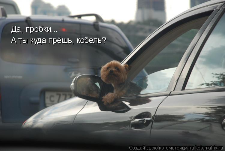 Котоматрица: Да, пробки... А ты куда прёшь, кобель?