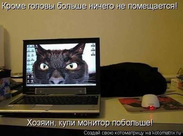 Котоматрица: Кроме головы больше ничего не помещается! Хозяин, купи монитор побольше!