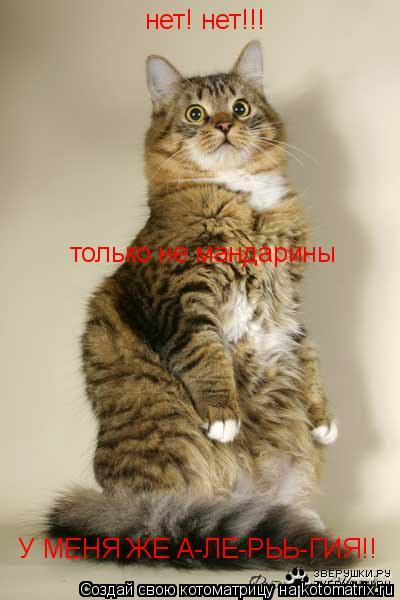 Котоматрица: нет! нет!!!  только не мандарины У МЕНЯ ЖЕ А-ЛЕ-РЬЬ-ГИЯ!!