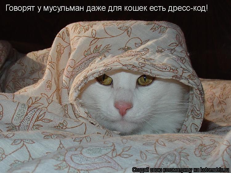 Котоматрица: Говорят у мусульман даже для кошек есть дресс-код!