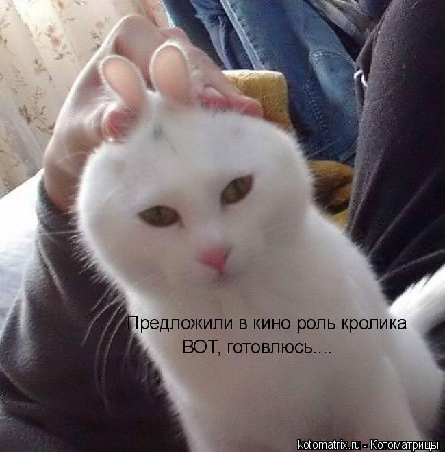 Котоматрица: Предложили в кино роль кролика ВОТ, готовлюсь....
