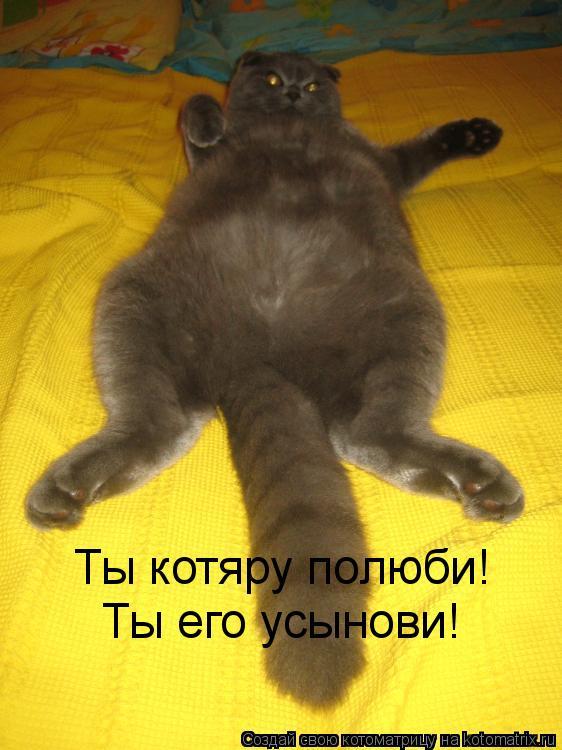 Котоматрица: Ты котяру полюби! Ты его усынови!