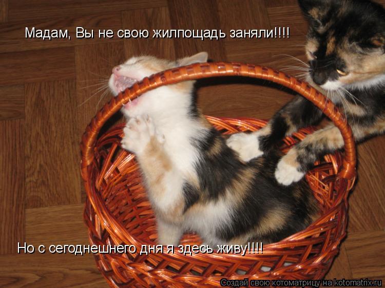 Котоматрица: Мадам, Вы не свою жилпощадь заняли!!!!  Но с сегоднешнего дня я здесь живу!!!!
