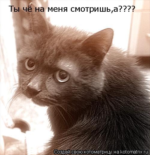 Котоматрица: Ты чё на меня смотришь,а????