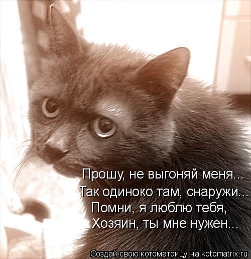 Котоматрица: Прошу, не выгоняй меня...  Так одиноко там, снаружи...  Помни, я люблю тебя,  Хозяин, ты мне нужен...