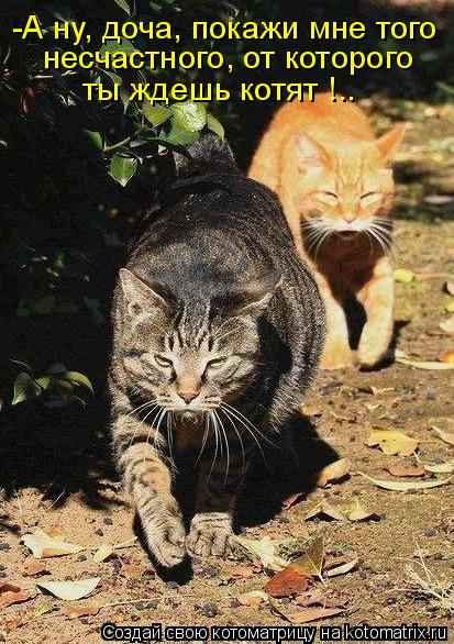Котоматрица: -А ну, доча, покажи мне того  несчастного, от которого ты ждешь котят !..