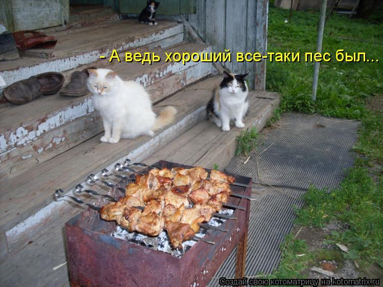 Котоматрица: - А ведь хороший все-таки пес был...