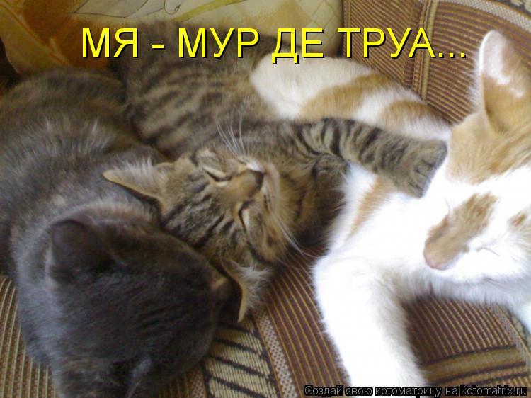 Котоматрица: МЯ - МУР ДЕ ТРУА...