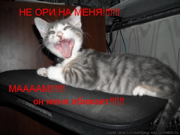 Котоматрица: НЕ ОРИ НА МЕНЯ!!!!!!! МААААМ!!!!!!  он меня абижает!!!!!!