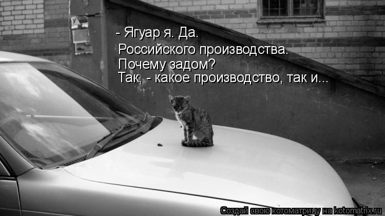 Котоматрица: - Ягуар я. Да. Российского производства. Почему задом? Так, - какое производство, так и...