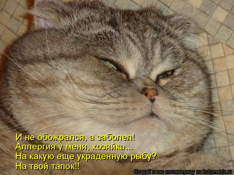 Котоматрица: И не обожрался, а заболел! Аллергия у меня, хозяйка... На какую еще украденную рыбу? На твой тапок!!