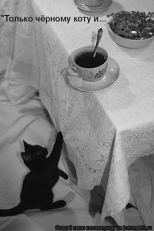"""Котоматрица: """"Только чёрному коту и..."""""""