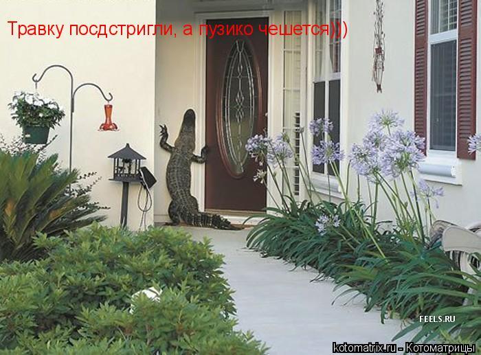 Котоматрица: Травку посдстригли, а пузико чешется)))