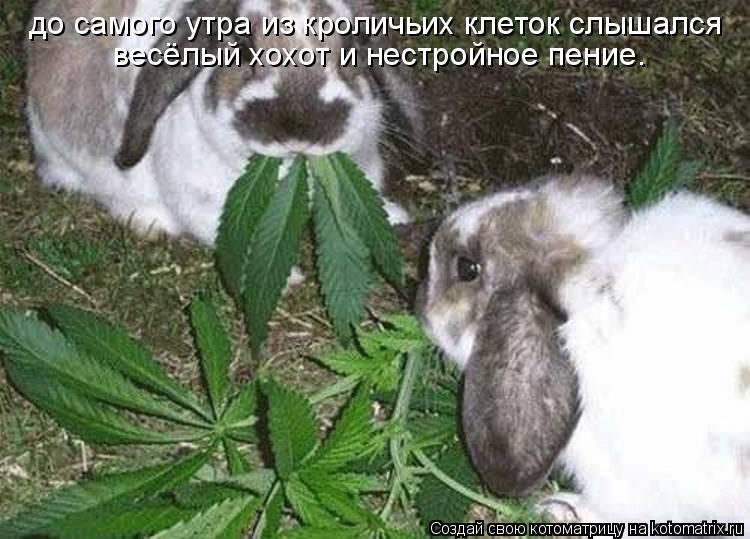 Котоматрица: до самого утра из кроличьих клеток слышался  весёлый хохот и нестройное пение.
