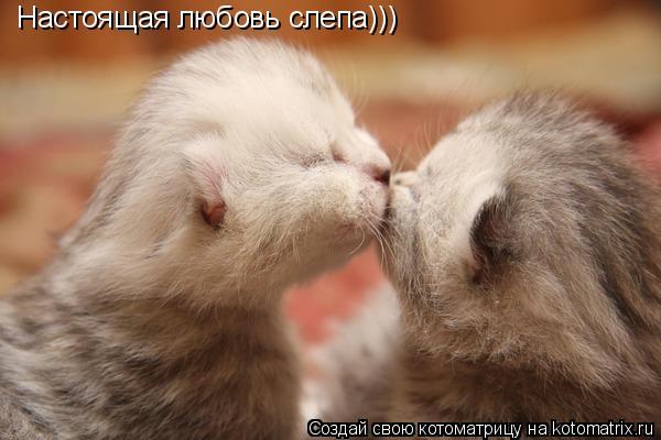 Котоматрица: Настоящая любовь слепа)))