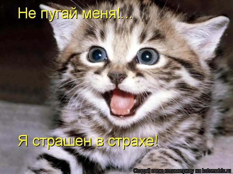 Котоматрица: Не пугай меня!... Я страшен в страхе!