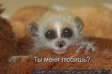 Котоматрица: Ты меня любишь?