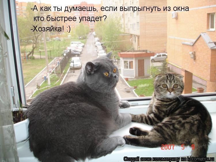Котоматрица: кто быстрее упадет? -А как ты думаешь, если выпрыгнуть из окна -Хозяйка! :)