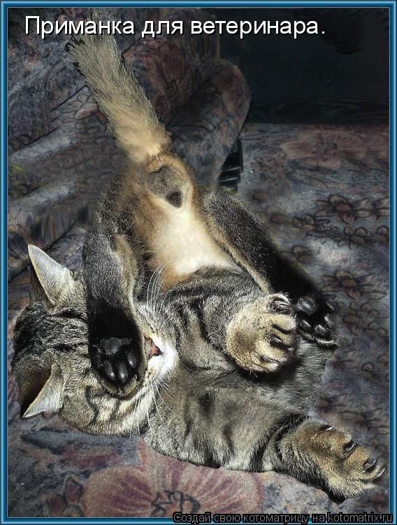 Котоматрица: Приманка для ветеринара.