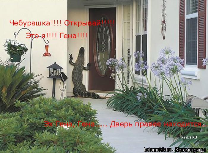 Котоматрица: Чебурашка!!!! Открывай!!!!! Чебурашка!!!! Открывай!!!!! Это я!!!! Гена!!!! Эх Гена, Гена..... Дверь правее находится...