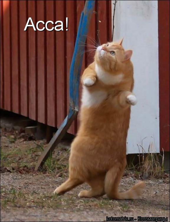 Котоматрица: Асса!