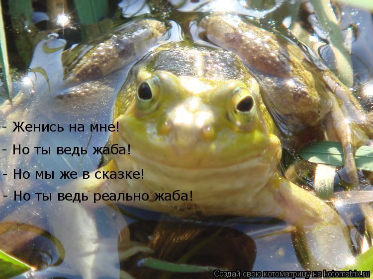 Котоматрица: - Женись на мне! - Но ты ведь жаба! - Но мы же в сказке! - Но ты ведь реально жаба!