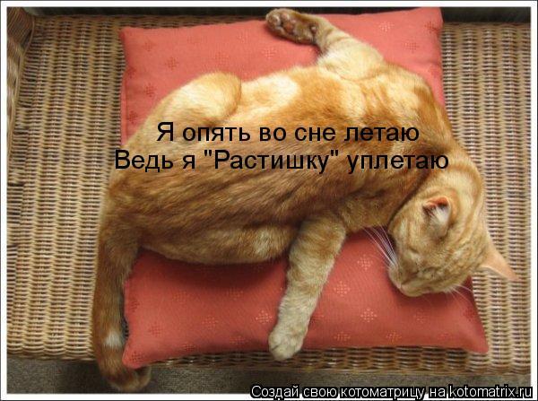 """Котоматрица: Я опять во сне летаю Ведь я """"Растишку"""" уплетаю"""