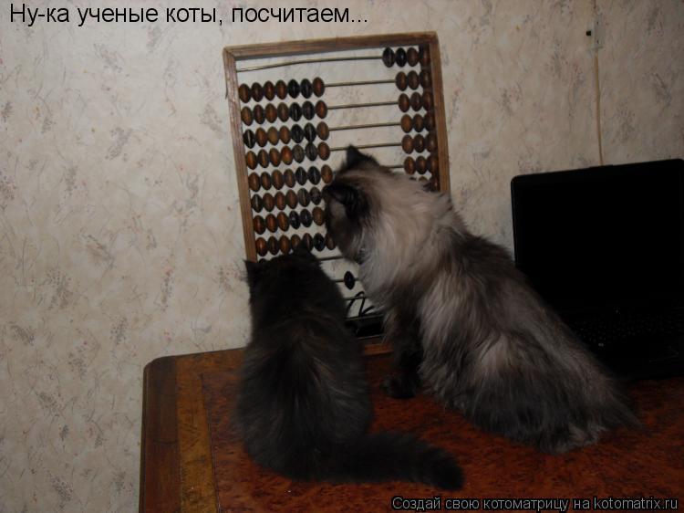 Котоматрица: Ну-ка ученые коты, посчитаем...