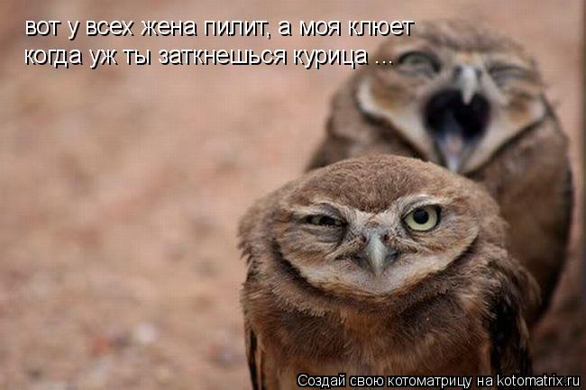 Котоматрица: вот у всех жена пилит, а моя клюет когда уж ты заткнешься курица ...