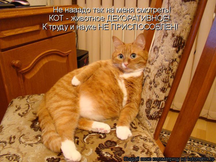 Котоматрица: Не нааадо так на меня смотреть! КОТ - животное ДЕКОРАТИВНОЕ! К труду и науке НЕ ПРИСПОСОБЛЕН!