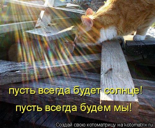 Котоматрица: пусть всегда будет солнце! пусть всегда будем мы!