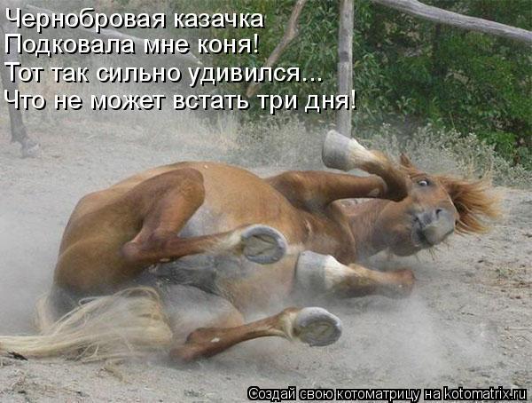 Котоматрица: Чернобровая казачка Подковала мне коня! Тот так сильно удивился... Что не может встать три дня!