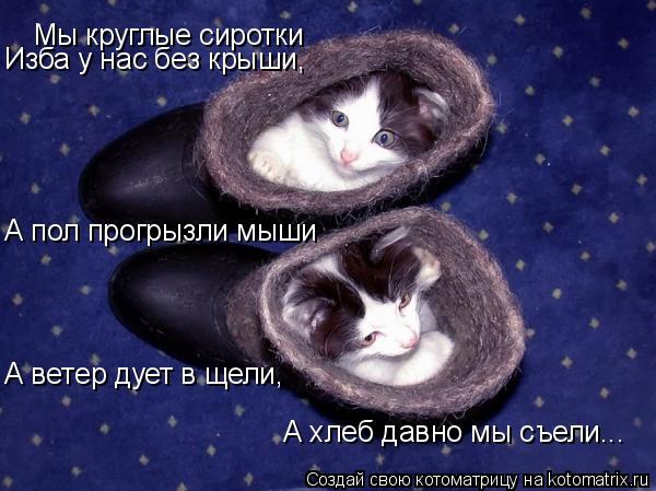 Котоматрица: Мы круглые сиротки Изба у нас без крыши, А пол прогрызли мыши А ветер дует в щели, А хлеб давно мы съели...