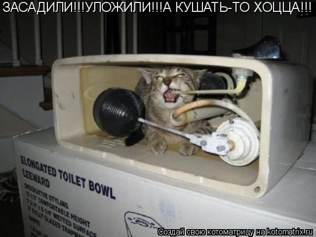 Котоматрица: ЗАСАДИЛИ!!!УЛОЖИЛИ!!!А КУШАТЬ-ТО ХОЦЦА!!!