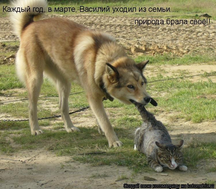 Котоматрица: Каждый год, в марте, Василий уходил из семьи.... природа брала своё!!