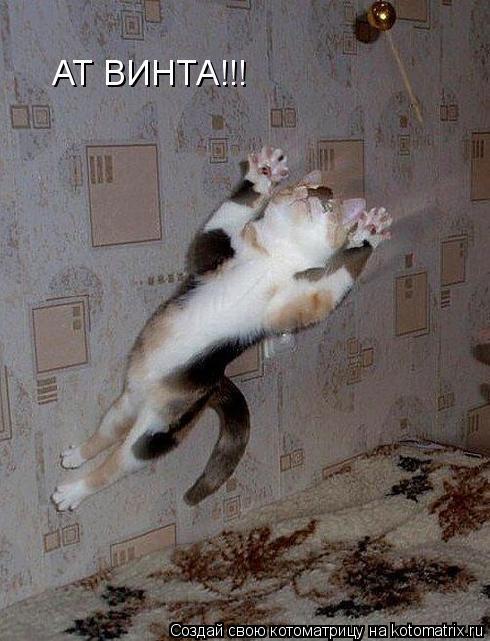 Котоматрица: АТ ВИНТА!!!