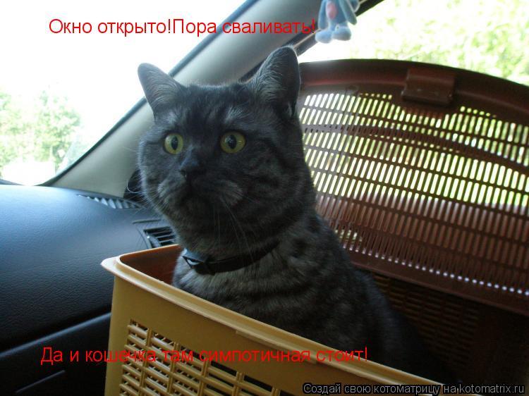 Котоматрица: Окно открыто!Пора сваливать! Да и кошечка там симпотичная стоит!