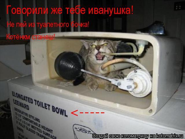 Котоматрица: <----- Не пей из туалетного бочка! Котёнкм станеш! Говорили же тебе иванушка!