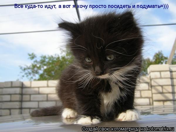 Котоматрица: Все куда-то идут, а вот я хочу просто посидеть и подумать=)))