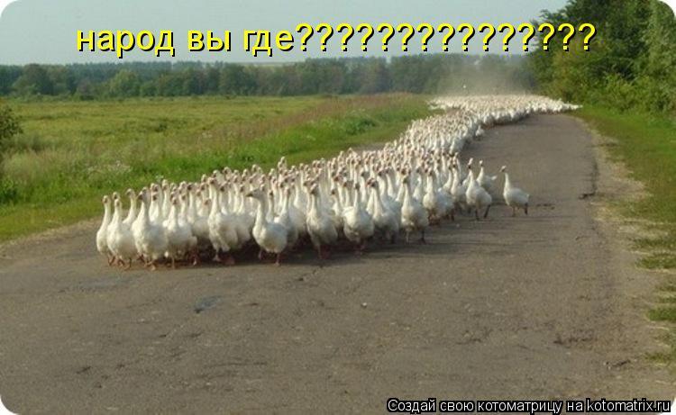 Котоматрица: народ вы где???????????????