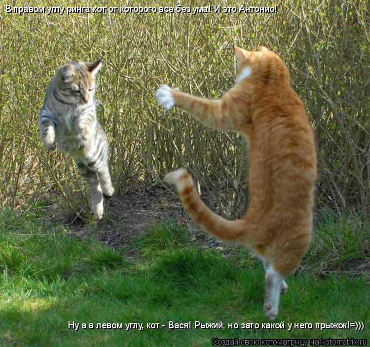 Котоматрица: В правом углу ринга кот от которого все без ума! И это Антонио! Ну а в левом углу, кот - Вася! Рыжий, но зато какой у него прыжок!=)))