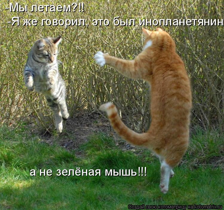 Котоматрица: -Мы летаем?!! -Я же говорил, это был инопланетянин а не зелёная мышь!!!