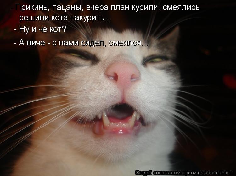 Котоматрица: - Прикинь, пацаны, вчера план курили, смеялись  решили кота накурить...    - Ну и че кот? - А ниче - с нами сидел, смеялся...