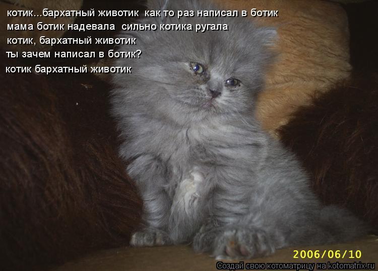 Котоматрица: котик...бархатный животик  как то раз написал в ботик      мама ботик надевала  сильно котика ругала котик, бархатный животик ты зачем написал