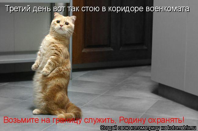 Котоматрица: Третий день вот так стою в коридоре военкомата Возьмите на границу служить, Родину охранять!