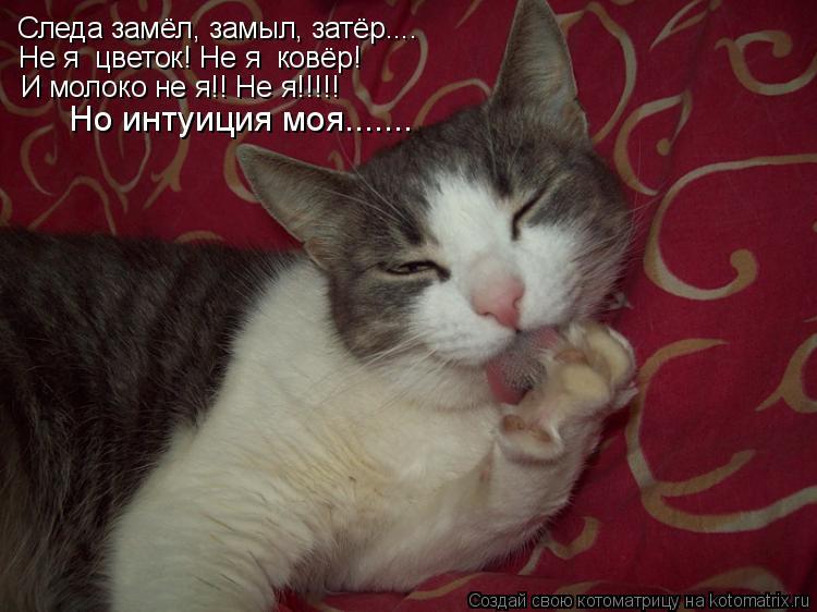 Котоматрица: Следа замёл, замыл, затёр.... Не я  цветок! Не я  ковёр! И молоко не я!! Не я!!!!! Но интуиция моя.......