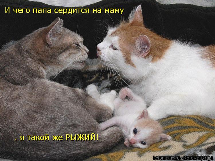 Котоматрица: И чего папа сердится на маму  – я такой же РЫЖИЙ!
