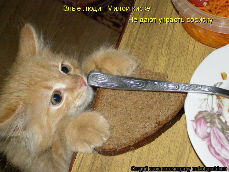 Котоматрица: Злые люди   Милой киске Не дают украсть сосиску