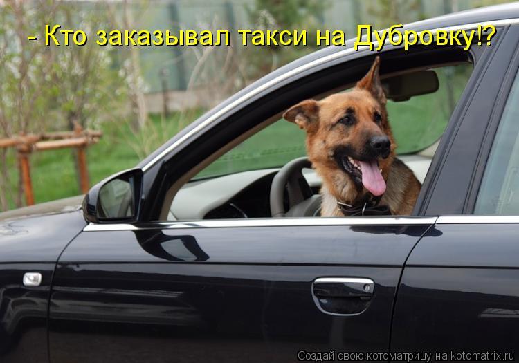 Котоматрица: - Кто заказывал такси на Дубровку!?